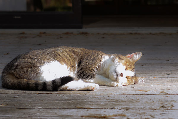 SKINNY THE CAT